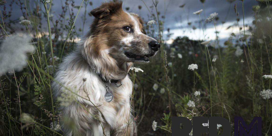 Portrait animalier