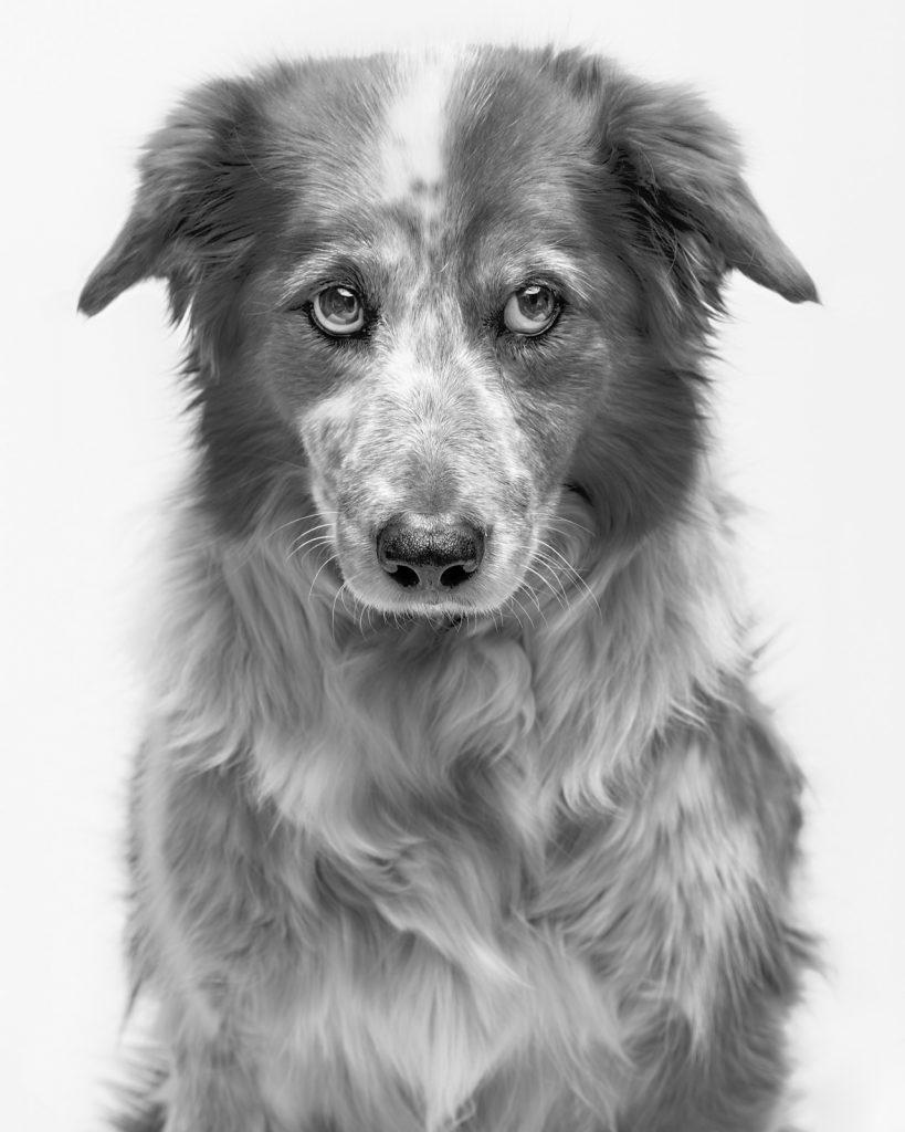 Portrait animalier réalisé par le photographe Red Méthot (Québec)